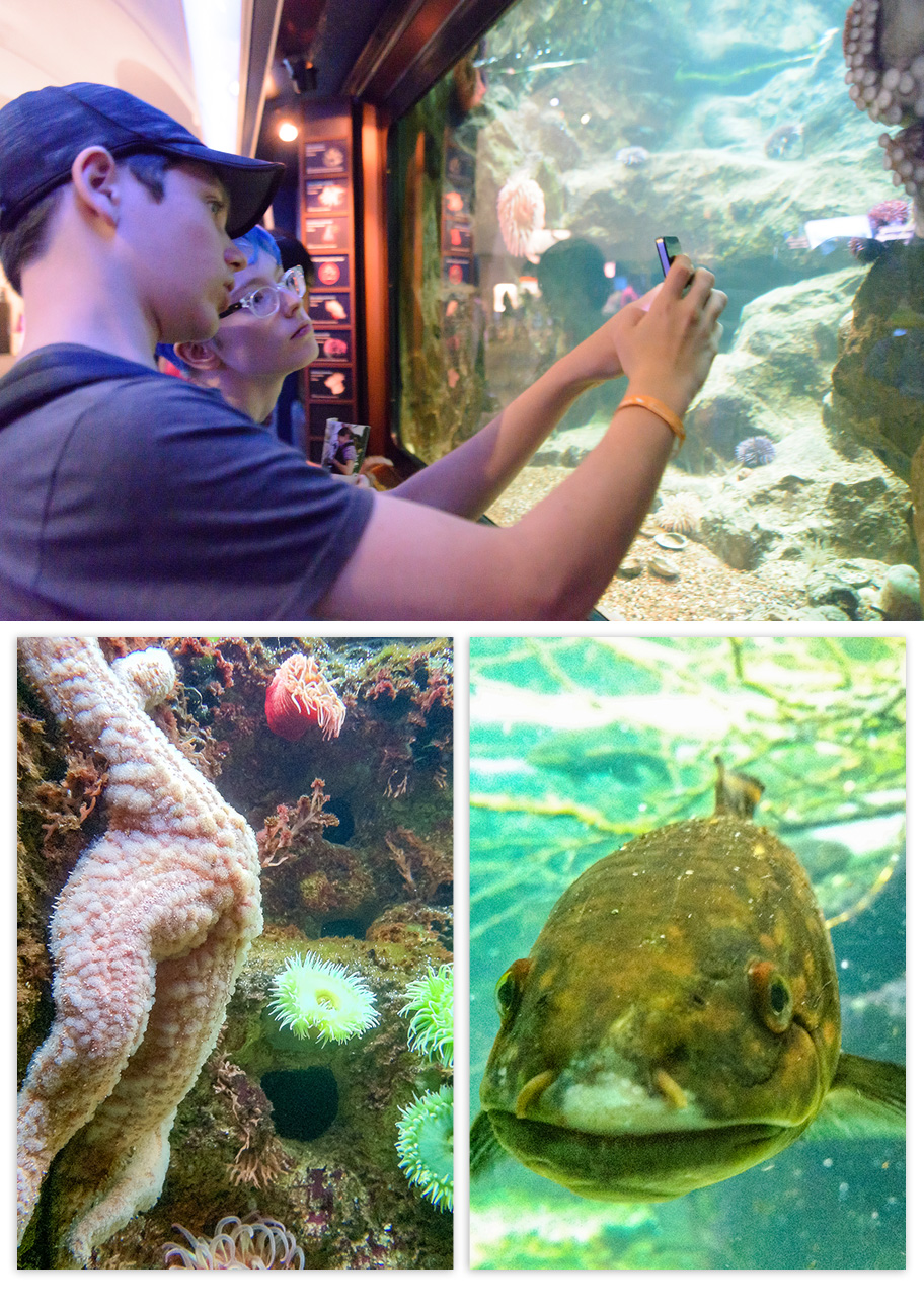 Teens taking a picture of things in an aquarium tank: a starfish and a green fish with a wide mouth